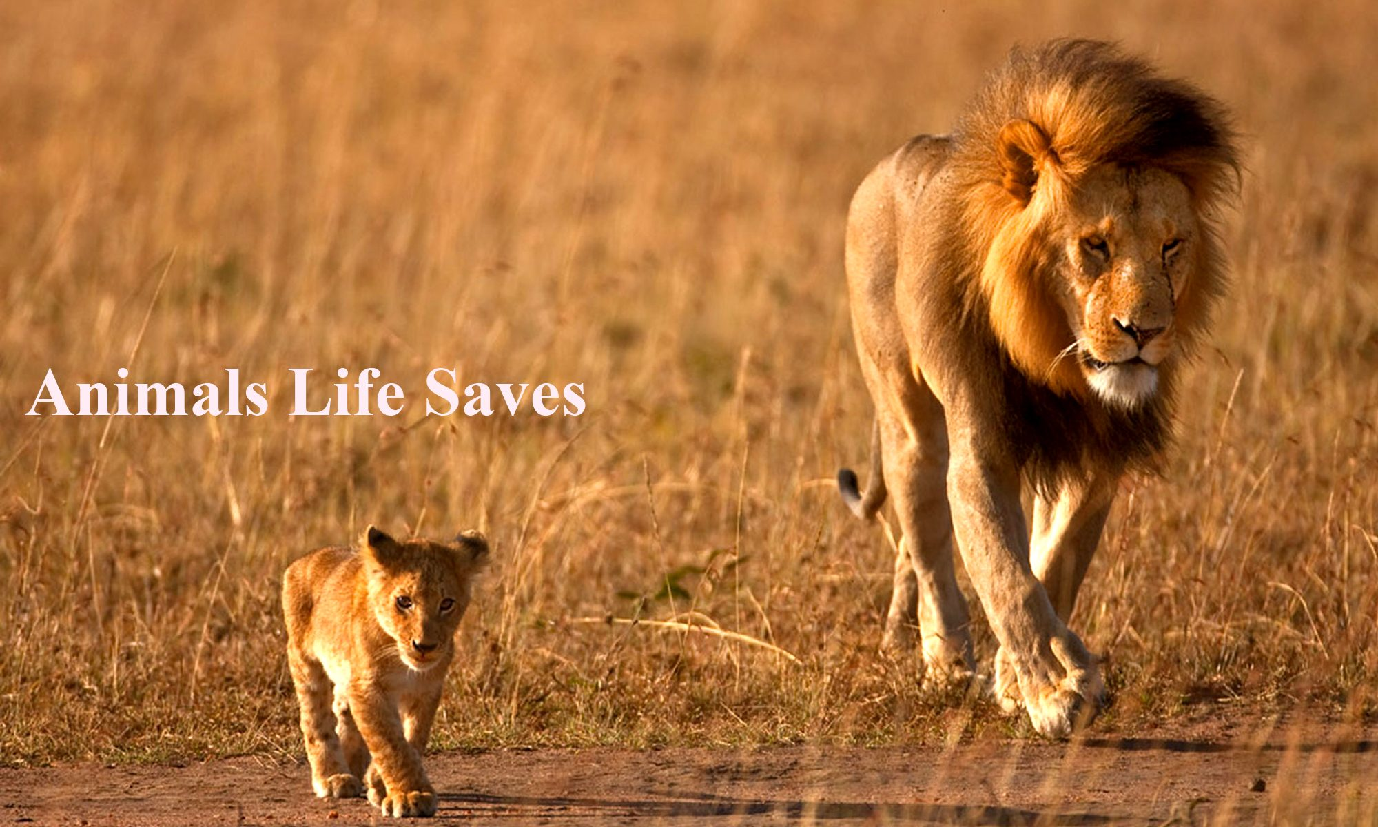 Animals Life Saves